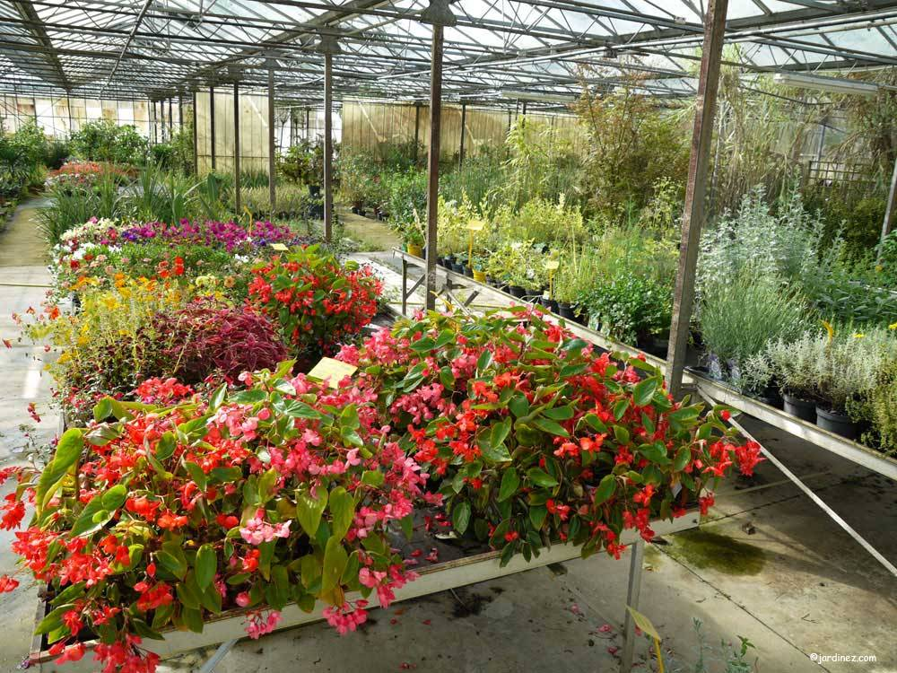 Pascal Morice Nurseries photo 5