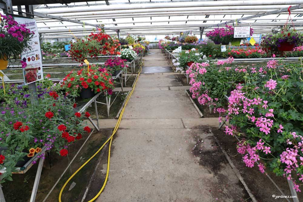The Stephanaises Greenhouses photo 3