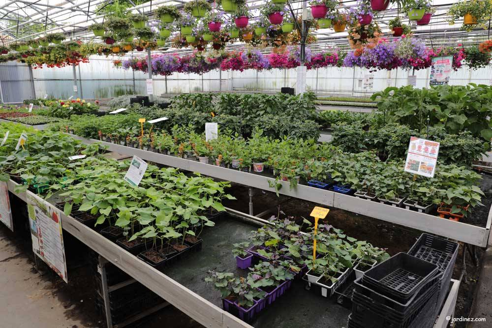 The Stephanaises Greenhouses photo 5