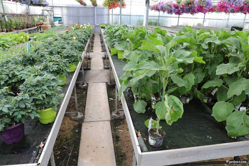 The Stephanaises Greenhouses photo 6