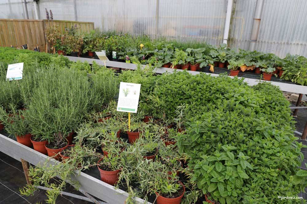 The Stephanaises Greenhouses photo 7