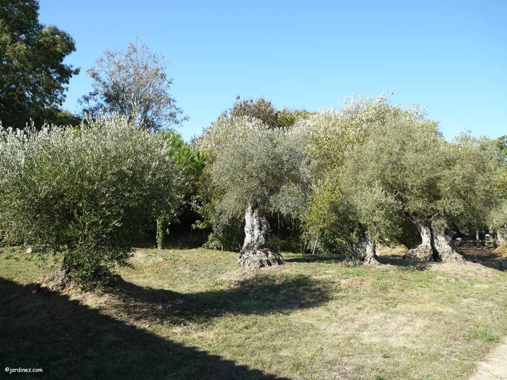 Les Jardins de Phocas photo 8