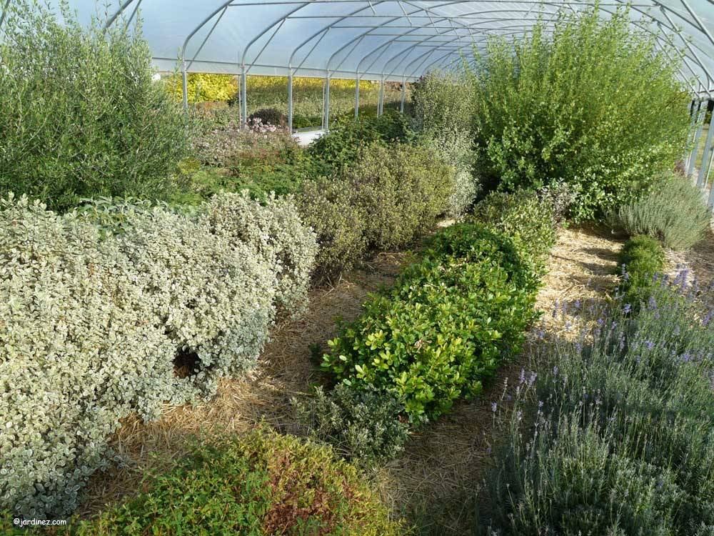 Bocage Tree Nurseries photo 10