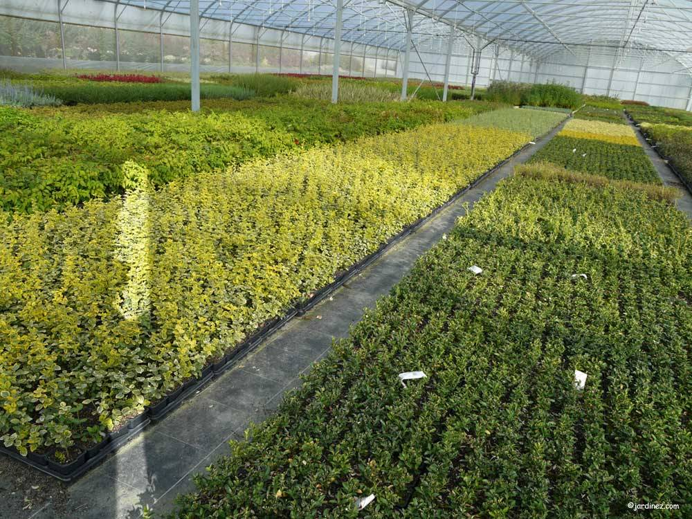 Bocage Tree Nurseries photo 7