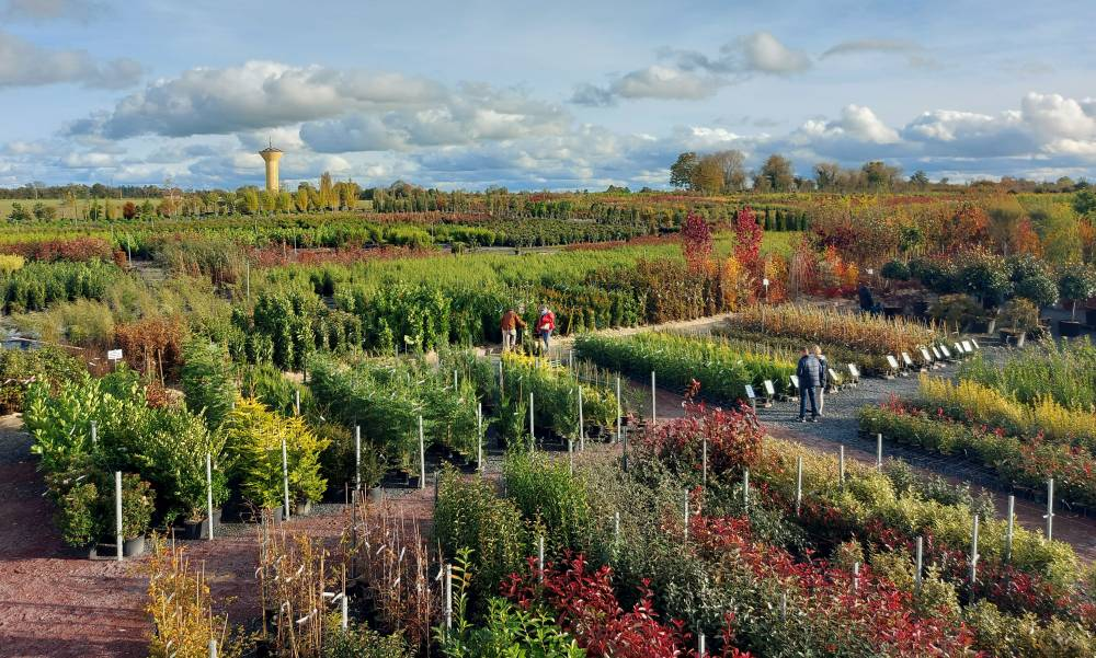 The Ramette Nurseries photo 4